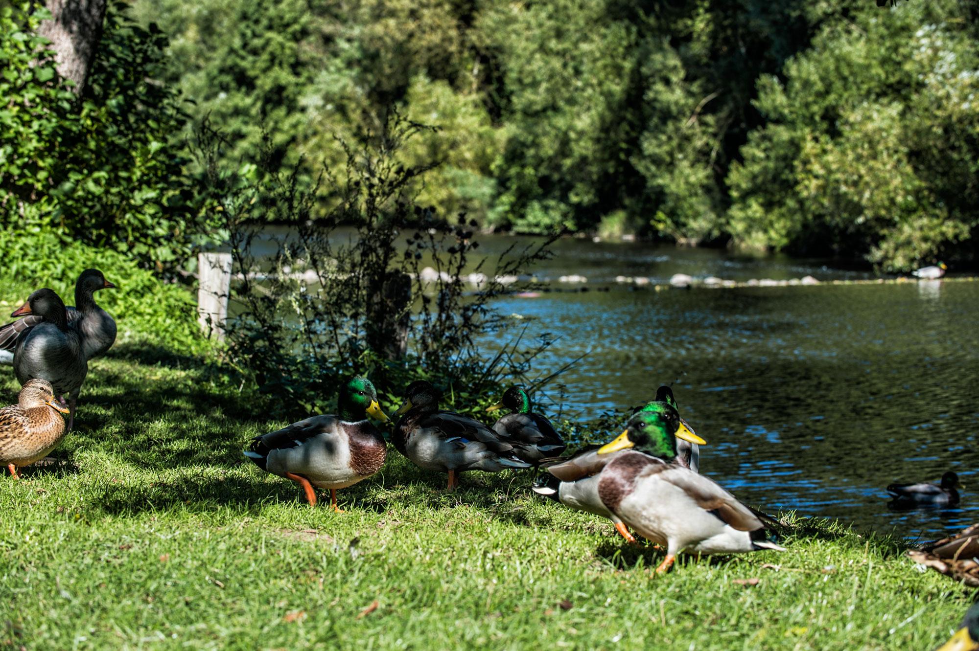 Hotel-Wasserrad-Meisenheim-6